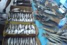 Спешиал фо любителей рыбки:)